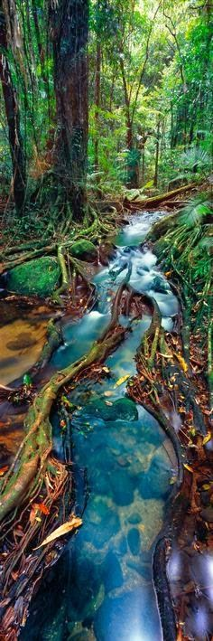 The Daintree, Queensland, Australia-10 Worlds Amazing Forests