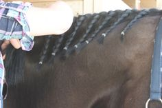Dressage button braids made easy!   http://www.proequinegrooms.com/index.php/tips/manes-and-tails/dressage-button-braids-with-yarn-so-easy/