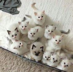 Pick one ♀️