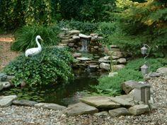 Goldfish and koi pond