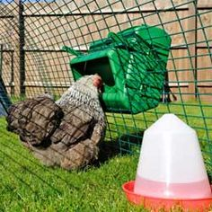 BEC Wise Chicken Feeder For Cages, 5kg (with free bracket)