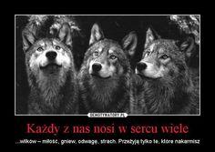 Każdy z nas nosi w sercu wiele – ...wilków – miłość, gniew, odwagę, strach. Przeżyją tylko te, które nakarmisz - Gleba.pl