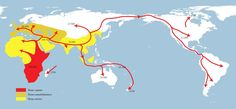 Map depicting early human migrations out of Africa. Scientists now are dating a mass migration back INTO Africa occurred approximately years ago. Early Humans, First Humans, African Origins, Homo, Human Evolution, Out Of Africa, World History, History Online, Ancient History