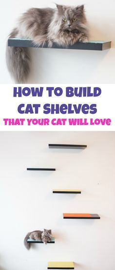 How to build cat shelves your cat will love! This is a easy DIY project that will be done in 30 minutes!