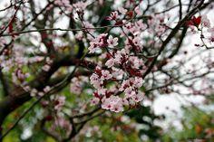 Timidi segni di Primavera...