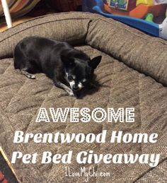awesome-brentwood-home-pet-bed-giveaway