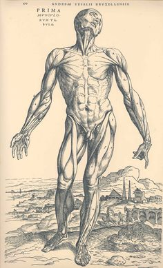 Drawing Human Anatomy Back Of Male Human Body Anatomical Study Originally Published In De Humani Corporis Fabrica Libri Septem (On The Fabric Of The Human Body In Seven Books) By Andreas Vesalius Published Basel 1543 This - Andreas Vesalius, Anatomy Study, Anatomy Drawing, Anatomy Art, Human Anatomy, Leg Anatomy, Anatomy Sketches, Muscle Anatomy, Male Figure Drawing