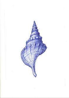 Ballpoint pen drawing. Shell. Elena Timtschenko