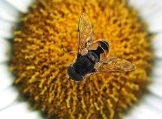 14 Best Honey Jam Barbados images in 2013 | Barbados, Honey