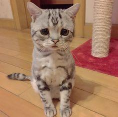 世界で一番悲しげな顔のニャンコが可愛すぎるwwwと話題に【動画】 - AOLニュース