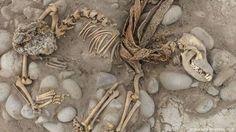 El misterioso cementerio de perros y humanos bajo el zoo de Perú