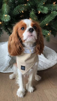 Diy Dog Gifts, Best Dog Gifts, Dog Lover Gifts, Dog Lovers, Cavalier King Charles Dog, Cavalier King Charles Spaniel Puppy, Cute Little Animals, Super Cute Animals, Pug