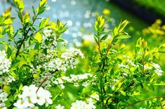Spring Pictures, Herbs, Herb, Medicinal Plants