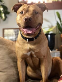 Things that make you go AWW! Like puppies, bunnies, babies, and so on. A place for really cute pictures and videos! Cute Cats And Dogs, All Dogs, I Love Dogs, Pitbull Pictures, Dog Pictures, Cute Pictures, Fluffy Animals, Cute Animals, Wild Animals