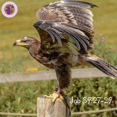 Free Image on Pixabay - Steppe Eagle, Eagle, Steppe, Nature Sports Games Online, Sports Games For Kids, Free Images, Animals In The Bible, Christian Vegan, Game Arena, Cattle, Pet Birds