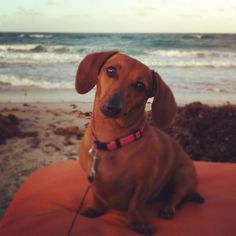 Why yes, I do like long walks on the beach