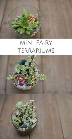 Make a Mini DIY Fairy Terrarium. Fun gardening or spring project for kids!