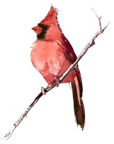bird art -Cardinal Bird Artwork - original one of akind red chrismtas watercolor art, chrismtas cardinal painting 10 x 8 by ORIGINALONLY on Etsy
