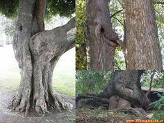 immagini curiose natura -