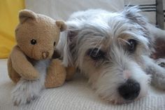Don't touch my teddy