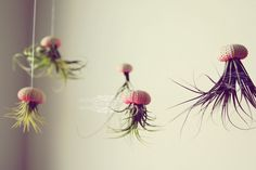 Creepy Jellyfish Air Plants