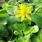 Chiftele de Post, din Ciuperci și Legume (Rețetă) | La Taifas Varicose Veins, Plant