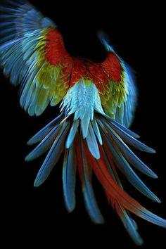 Green wing macaw                                                                                                                                                                                 Más
