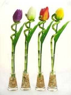 More Lucky Bamboo Ideas
