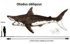 Otodus obliquus by Teratophoneus
