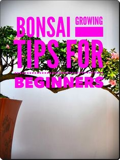 How Not to Kill Your Bonsai Trees