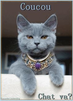In Ancient Egypt Cat were considered Gods Blue Cats, Grey Cats, Grey Kitten, I Love Cats, Cool Cats, Egypt Cat, Funny Animals, Cute Animals, Gatos Cats
