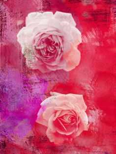 Red White Roses Canvas