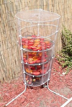 Best 11 Need a quick tomato drying rack? I grow tomatoes and found myself with a lot of tomatoes, so many that I wasn't using them fast enough. I happen to love sun dried tomatoes and chili's and decided I would throw together a quick drying rack. Herb Drying Racks, Drying Herbs, Backyard Vegetable Gardens, Vegetable Garden Design, Outdoor Gardens, Garden Projects, Garden Tools, Herbs Garden, Easy Garden