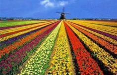 flower fields, spring