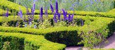 formal garden + flowers