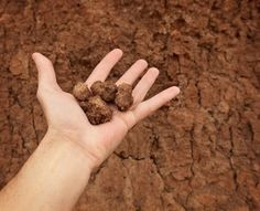 Clay Soil Improvement