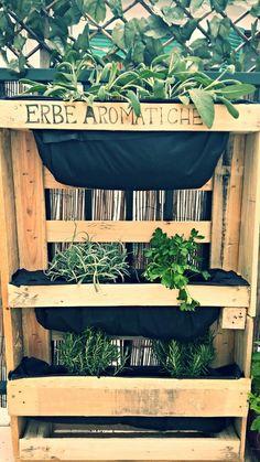 vegetable garden in the balcony - herbs
