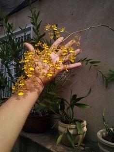 Chuva de ouro