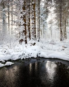 Snow in the forest. Yorkshire Dales National Park, England.