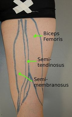 HAMSTRINGS- stretches, soft tissue mobilization, exercises... For every major muscle group. ~Athletes Treating Athletes.