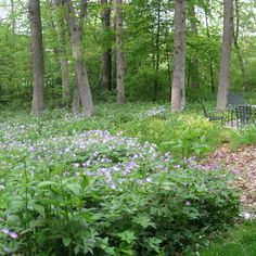 Native Plants: Tips From the Experts