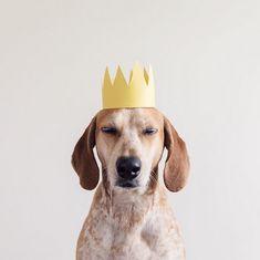 lifedog2 – Fubiz™