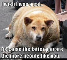 Look at That Adorable Fat Cat, They Said