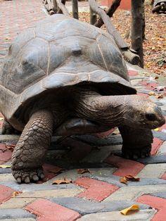 Viaggio a Zanzibar: Prison Island e Stone Town, tra dhow e tartarughe giganti (2 parte)   Non Solo Turisti