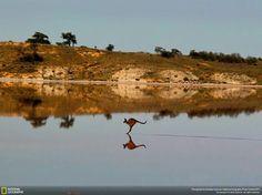 The Roo is sking crosses salt Lakes  in Australia's Murray-Sunset National Park photo by Christian Spencer