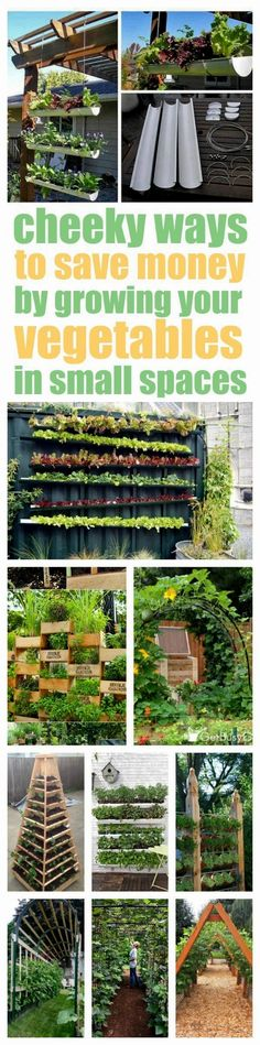 Definitely CHEEKY! And a little bit sneaky, too. Never thought of attaching gutters to a wall to grow lettuce. How awesome! Check out these vertical vegetable garden ideas that will solve your garden space problems so you can start growing your own veggies today! #VegetableGarden