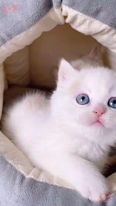 Cute Little Kittens, Cute Baby Cats, Baby Kittens, Cute Funny Animals, Kittens Cutest, Cats And Kittens, Puppies And Kitties, Cute Puppies, Funny Animal Videos