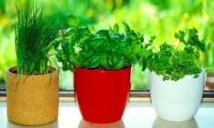 8herbs and spices that can beeasily grown inthe kitchen