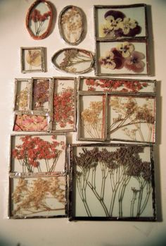 ..I'm working on an Herbarium. My plan is to fill the walls of my workshop/greenhouse with them. :))