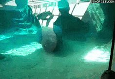 This Matinee bump is the cutest thing ever – check out more viral funny GiFs!